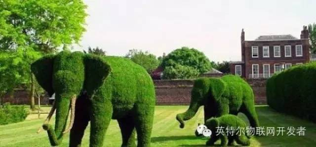 你造屌丝的后花园是怎么打理的吗?